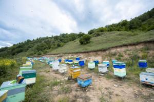 Kəlbəcər yaylaqlarına daha 2500 arı ailəsinin köçürülməsinə başlanılıb