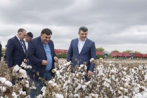 Azərbaycanda kombaynlar vasitəsilə kütləvi pambıq yığımına başlanılıb
