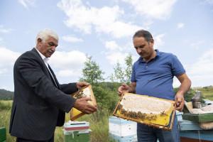 Kəlbəcərdən sonra Laçın yaylaqlarına da arıçılıq təsərrüfatlarının köçürülməsi təmin edilib